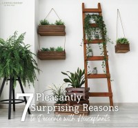 7 Pleasantly Surprising Reasons to Decorate with Houseplants